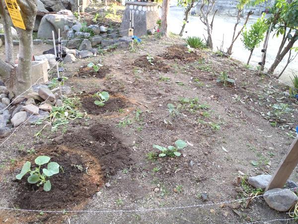 2016年の家庭菜園