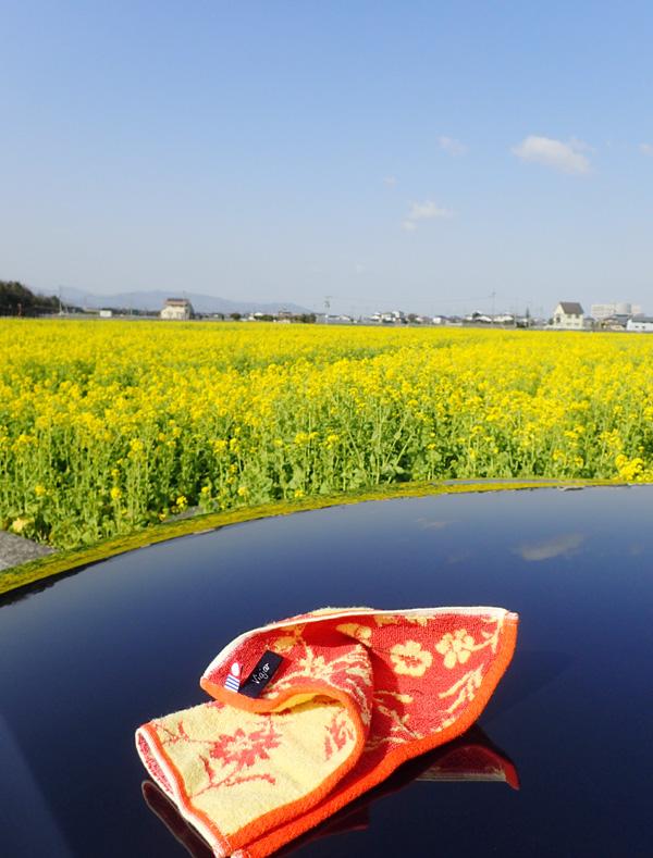 愛媛県東温市見奈良の菜の花