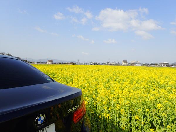 東温市見奈良の菜の花畑