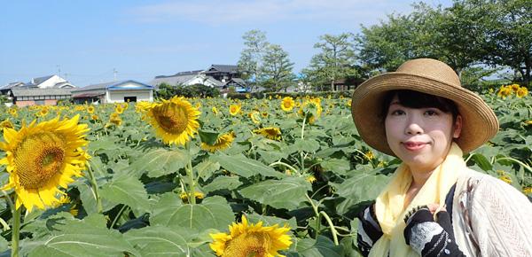 愛媛県伊予郡松前町ひょこたん池のヒマワリ畑