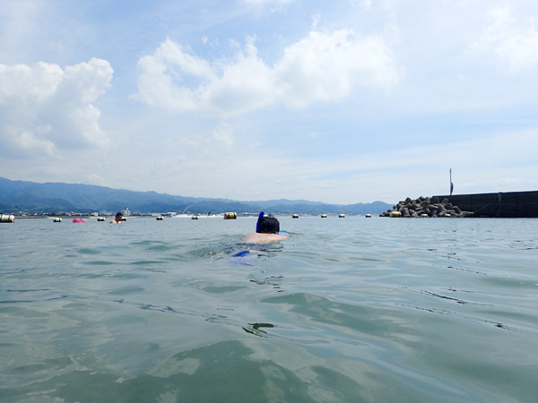愛媛鹿島海水浴場でシュノーケリング