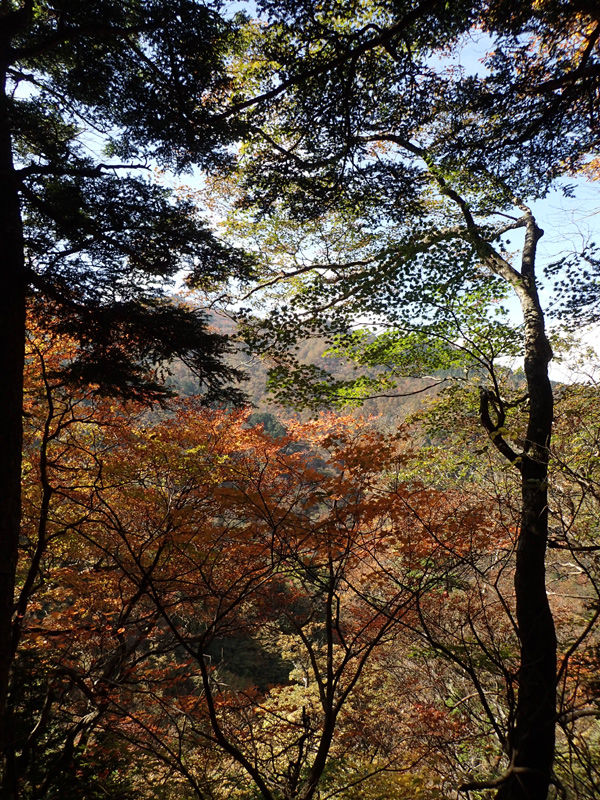 石鎚山山頂へ続く道と紅葉