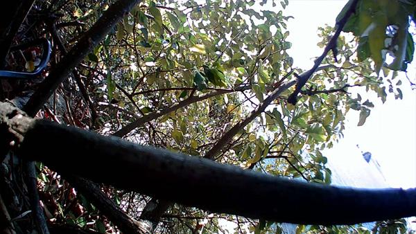 北条鹿島でドローン空撮事故